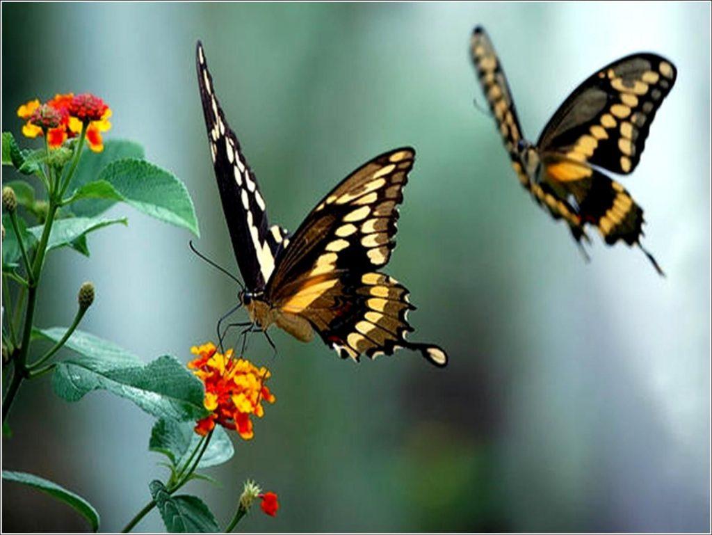 Fotos de borboletas (1)