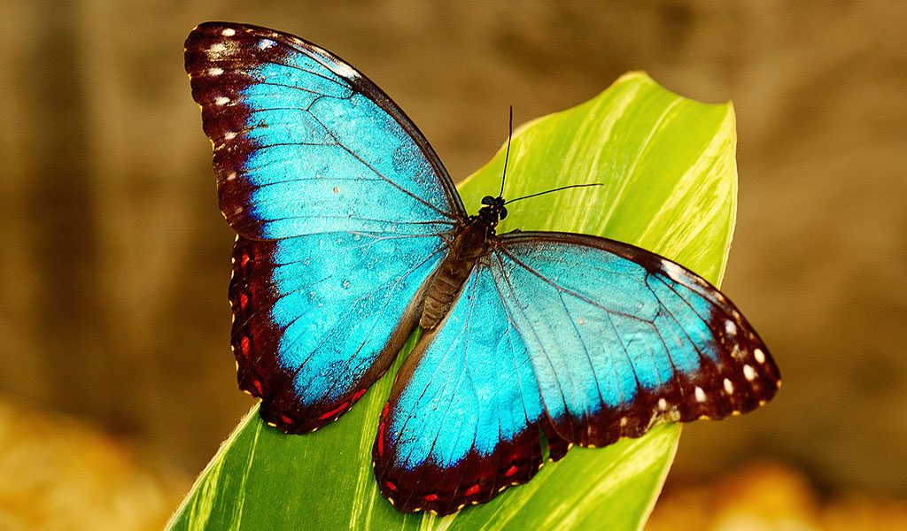 Fotos de borboletas (13)