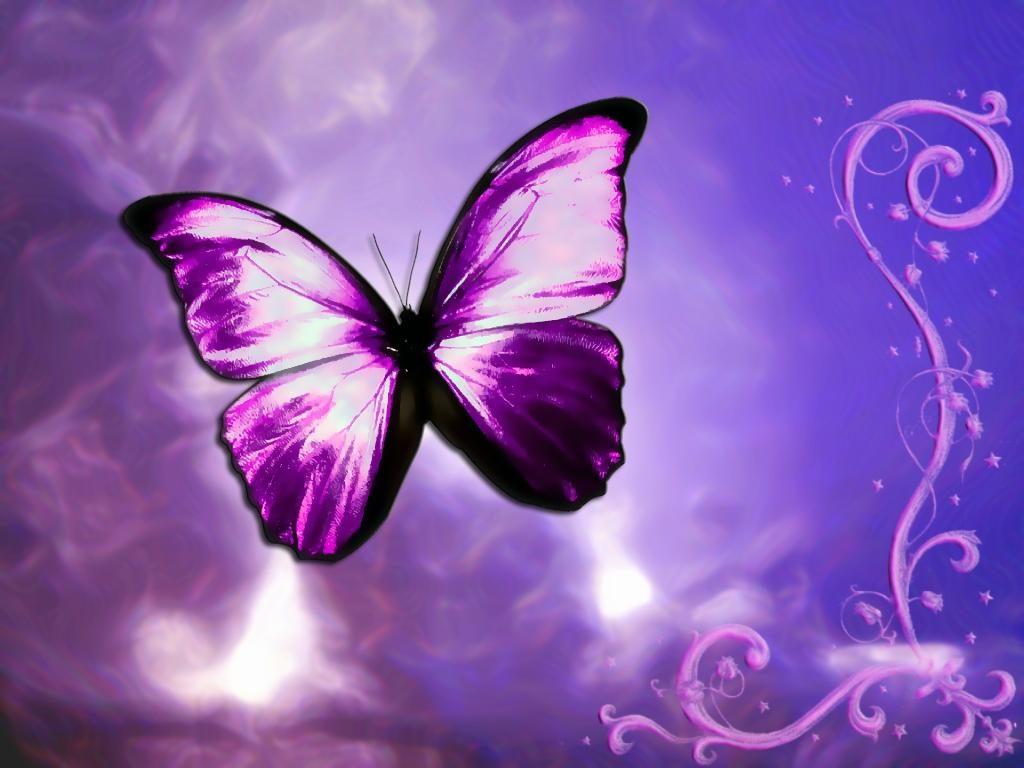 Fotos de borboletas (14)