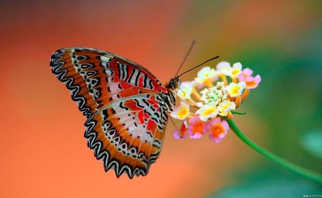 Fotos de borboletas (15)