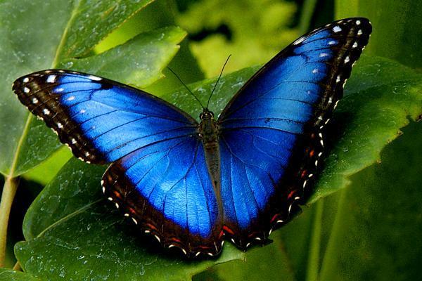 Fotos de borboletas (2)