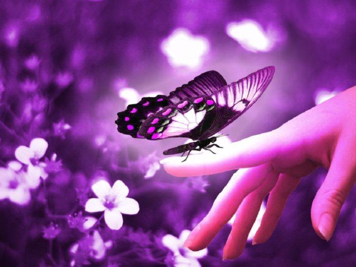 Fotos de borboletas (3)