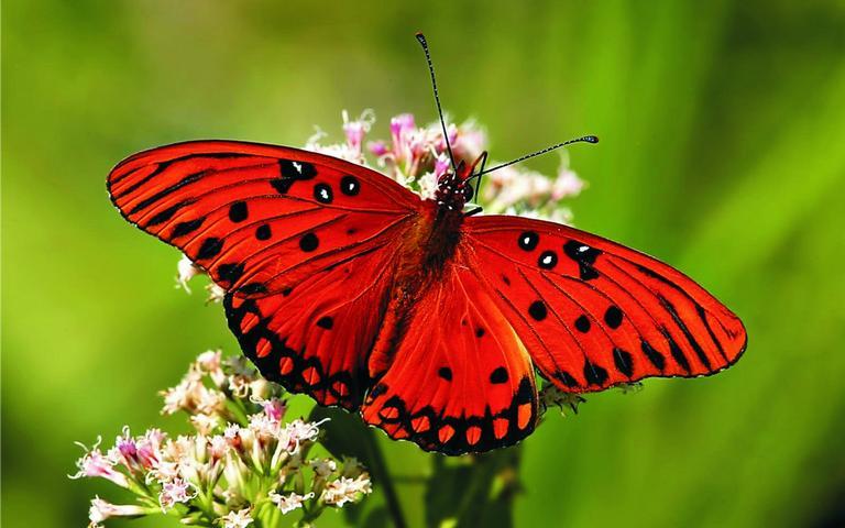 Fotos de borboletas (4)