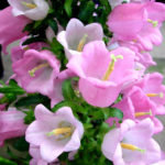 Linda variedade de flores coloridas